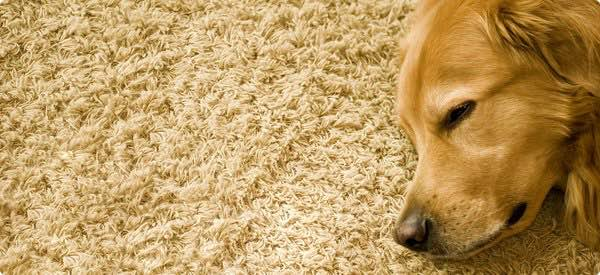 remove carpet odour