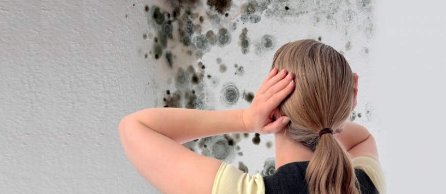 Looking For A Professional Mold Cleaning Company In